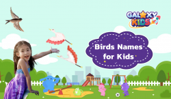 Birds Names for Kids
